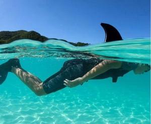 Плавник акулы