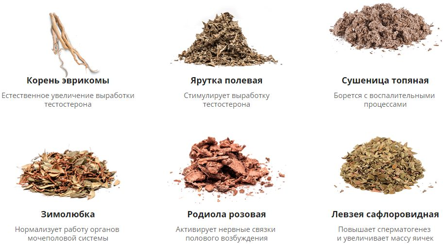 Состав лексопола